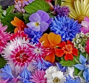 edible-flowers-1